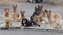 Buddy, Sheba, Tanya, Baily, Sasha, Max, Duchess, Skye