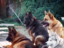Max, Bear, Buddy, Koty