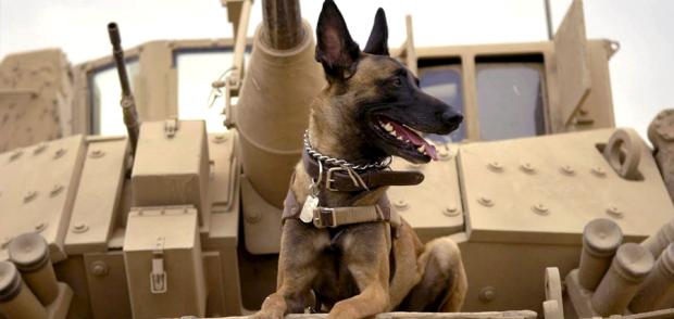 primul-trailer-pentru-max-cainele-militar.png