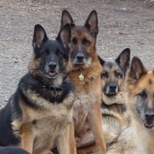 Sasha, Max & Duchess